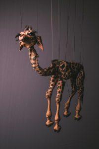 Grace the Giraffe 2