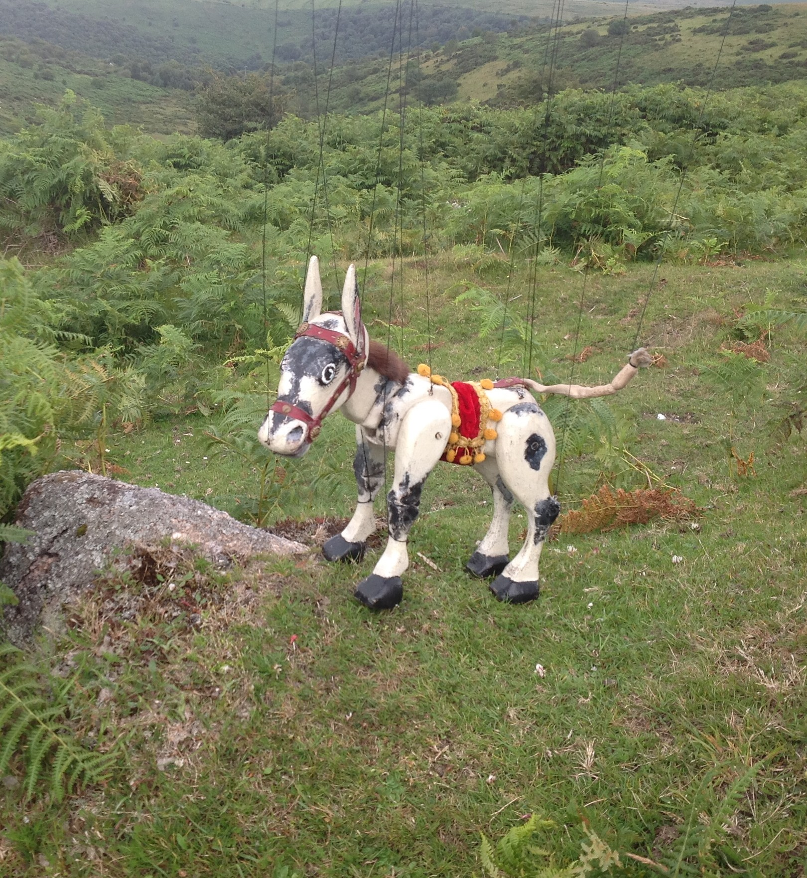 The original Muffin the Mule enjoying a birthday stroll on Dartmoor